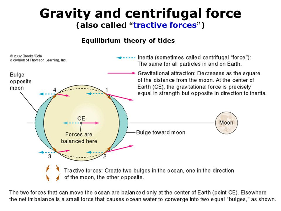 """Gravity and centrifugal force (also called """" tractive forces """" ) Together:The earth-moon system Equilibrium theory of tides"""