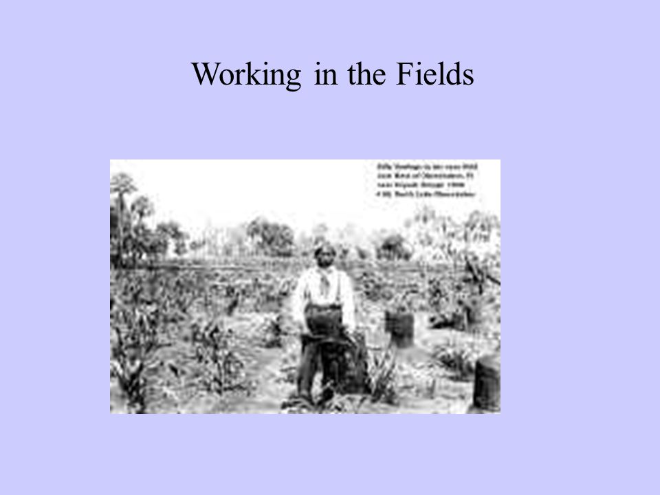 Working in the Fields