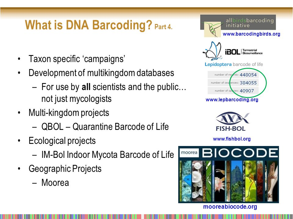 Taxon specific 'campaigns' Development of multikingdom databases –For use by all scientists and the public… not just mycologists Multi-kingdom projects –QBOL – Quarantine Barcode of Life Ecological projects –IM-Bol Indoor Mycota Barcode of Life Geographic Projects –Moorea What is DNA Barcoding.