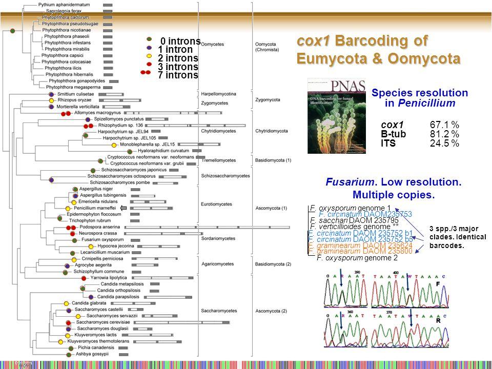 cox1 Barcoding of Eumycota & Oomycota 0 introns 1 intron 2 introns 3 introns 7 introns Species resolution in Penicillium cox167.1 % B-tub81.2 % ITS24.5 % F.