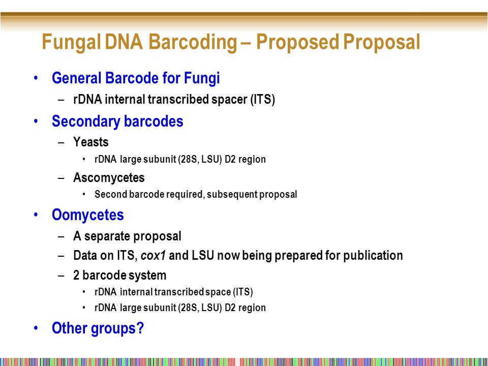 Fungal DNA Barcoding – Proposed Proposal General Barcode for Fungi – rDNA internal transcribed spacer (ITS) Secondary barcodes – Yeasts rDNA large subunit (28S, LSU) D2 region – Ascomycetes Second barcode required, subsequent proposal Oomycetes – A separate proposal – Data on ITS, cox1 and LSU now being prepared for publication – 2 barcode system rDNA internal transcribed space (ITS) rDNA large subunit (28S, LSU) D2 region Other groups