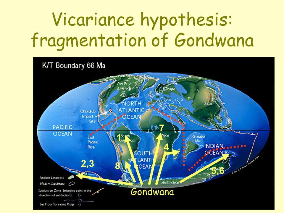 Vicariance hypothesis: fragmentation of Gondwana 1 7 4 2,3 5,6 8 Gondwana