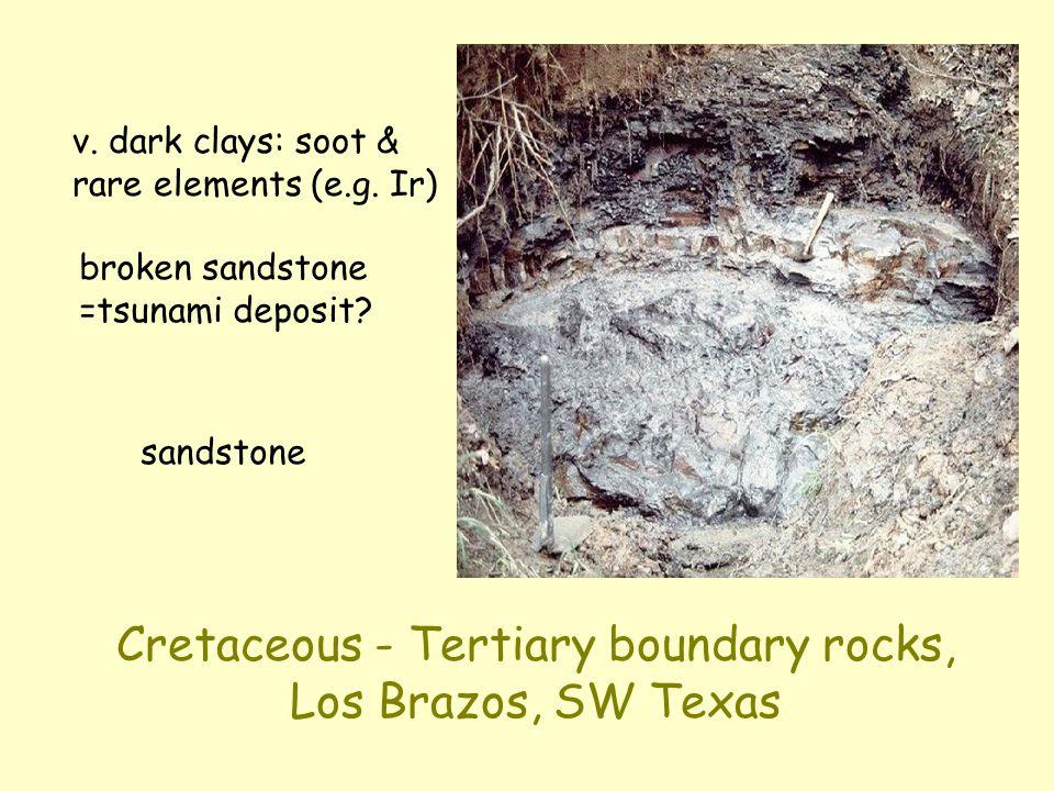 Cretaceous - Tertiary boundary rocks, Los Brazos, SW Texas sandstone broken sandstone =tsunami deposit.