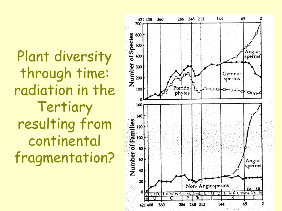 Plant diversity through time: radiation in the Tertiary resulting from continental fragmentation?
