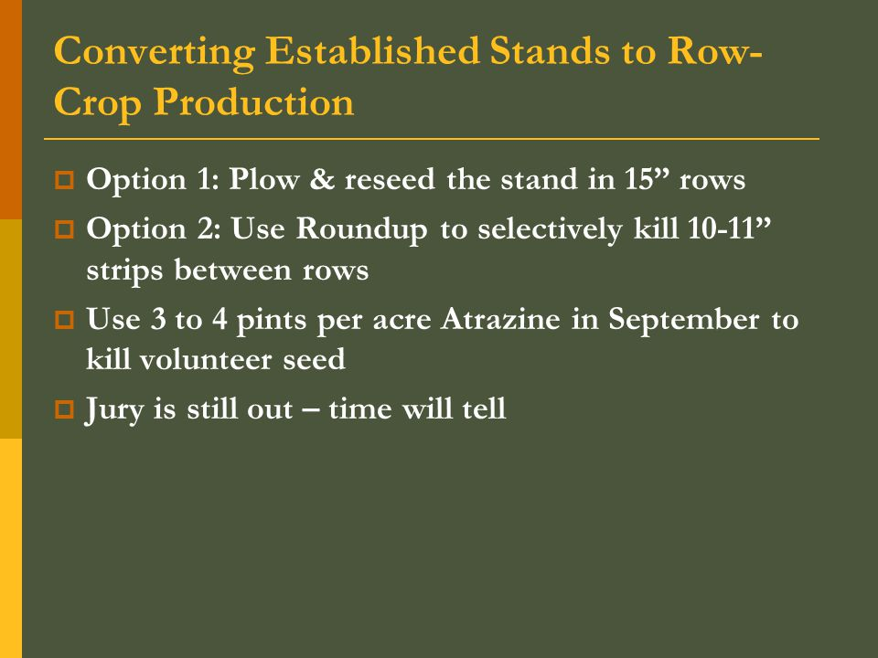 Converting Established Stands to Row- Crop Production  Option 1: Plow & reseed the stand in 15 rows  Option 2: Use Roundup to selectively kill 10-11 strips between rows  Use 3 to 4 pints per acre Atrazine in September to kill volunteer seed  Jury is still out – time will tell