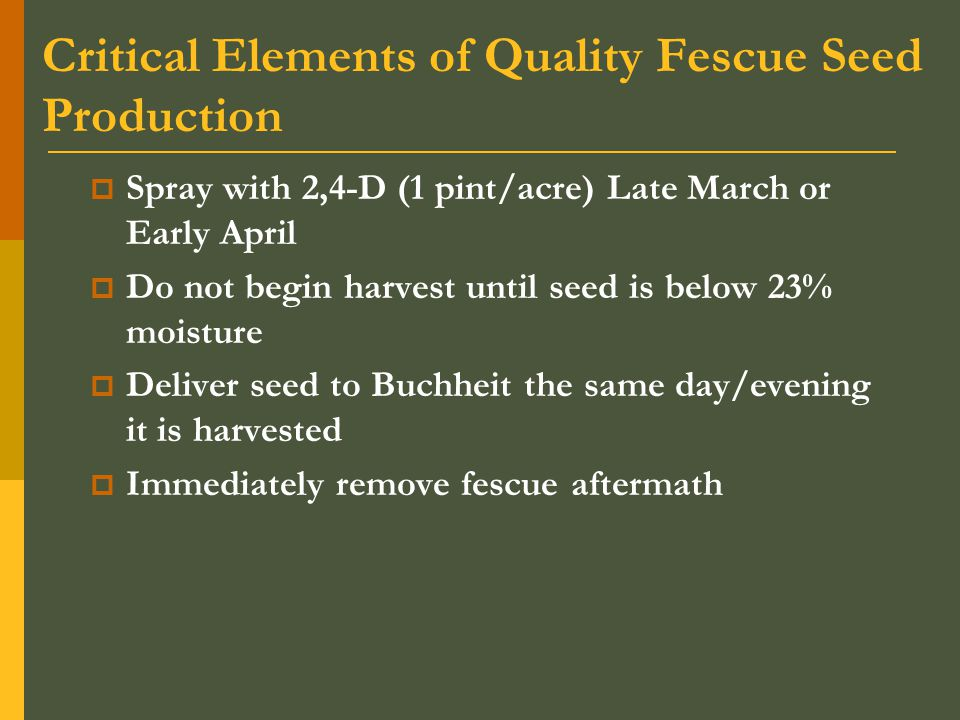Critical Elements of Quality Fescue Seed Production  Spray with 2,4-D (1 pint/acre) Late March or Early April  Do not begin harvest until seed is below 23% moisture  Deliver seed to Buchheit the same day/evening it is harvested  Immediately remove fescue aftermath