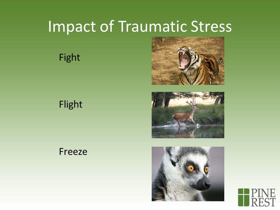 Impact of Traumatic Stress Fight Flight Freeze
