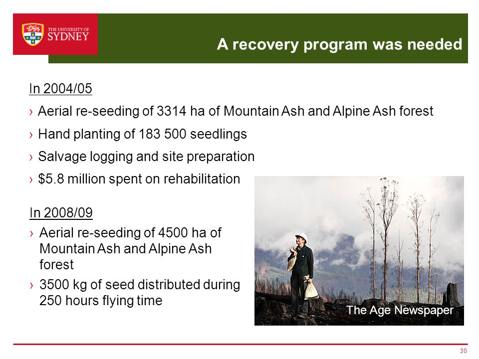 A recovery program was needed 30 The Age Newspaper In 2004/05 ›Aerial re-seeding of 3314 ha of Mountain Ash and Alpine Ash forest ›Hand planting of 18