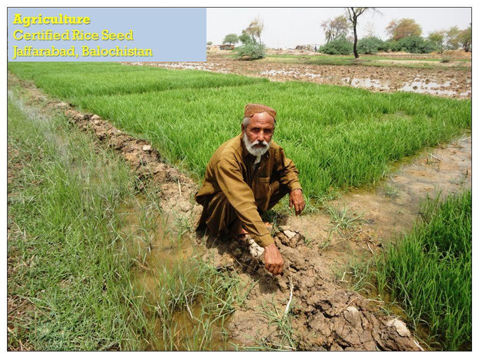 RAPID Fund presentation for Effective Development Conference, Bangkok Agriculture Certified Rice Seed Jaffarabad, Balochistan