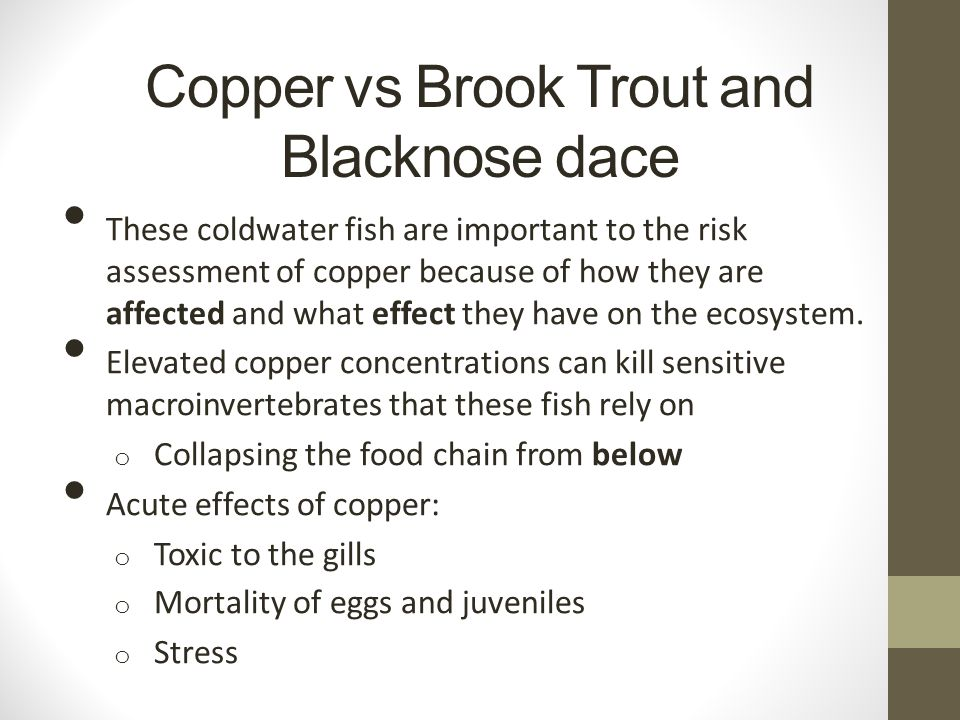Copper vs Brook Trout and Blacknose dace These coldwater fish are important to the risk assessment of copper because of how they are affected and what effect they have on the ecosystem.