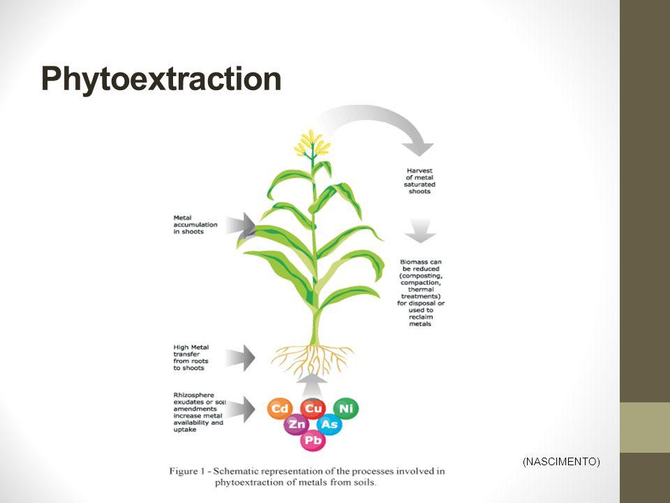 Phytoextraction (NASCIMENTO)