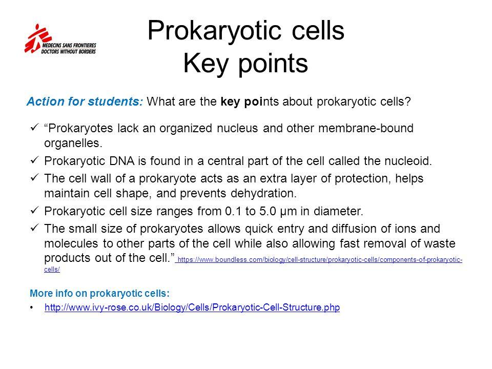 Prokaryotic cells Key points Prokaryotes lack an organized nucleus and other membrane-bound organelles.