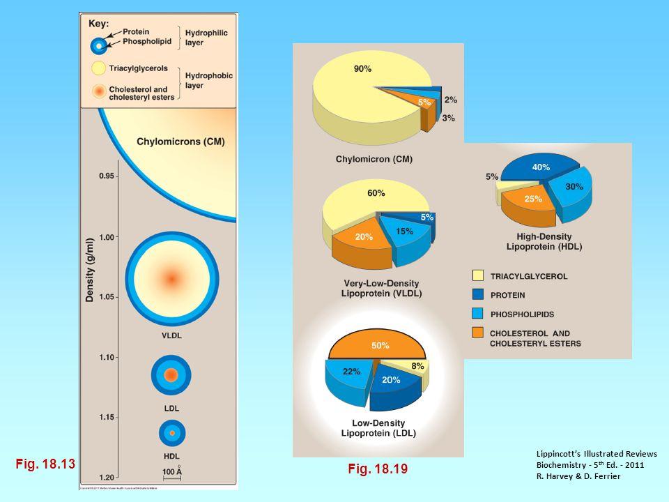 Lippincott's Illustrated Reviews Biochemistry - 5 th Ed. - 2011 R. Harvey & D. Ferrier Fig. 18.19 Fig. 18.13