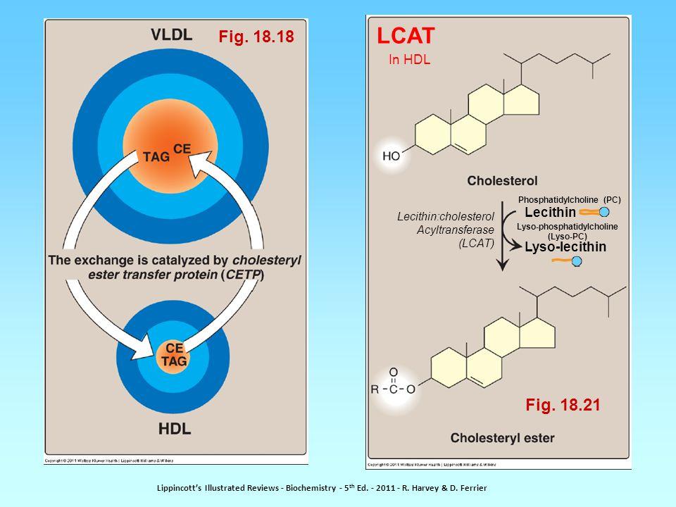 Fig. 18.18 Lecithin:cholesterol Acyltransferase (LCAT) Lecithin Lyso-lecithin LCAT In HDL Phosphatidylcholine (PC) Lyso-phosphatidylcholine (Lyso-PC)