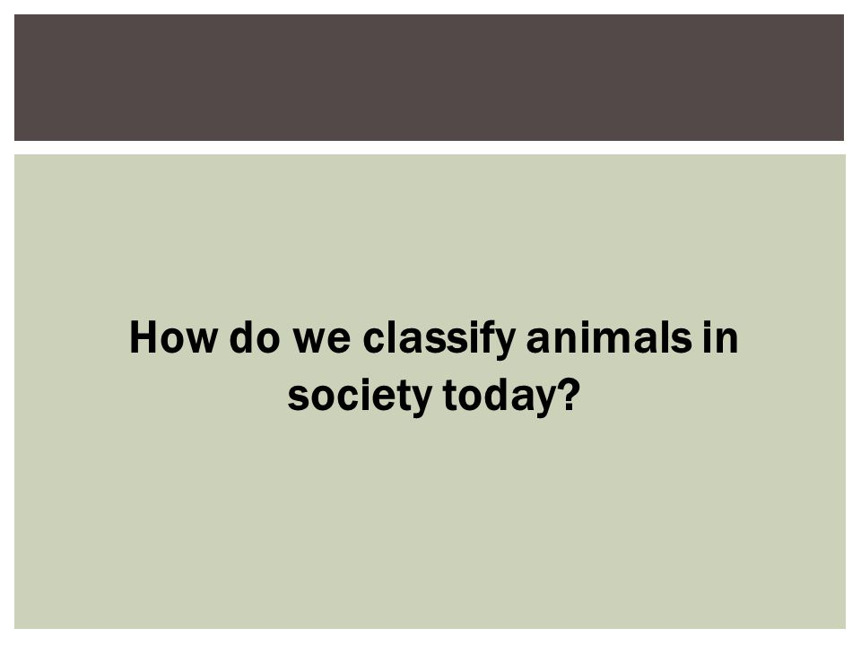  Since the time of Aristotle, humans have always ranked higher than animals; the sociozoologic scale ranks animals in a structure of meaning that allows humans to define, reinforce, and justify their interactions with other beings.