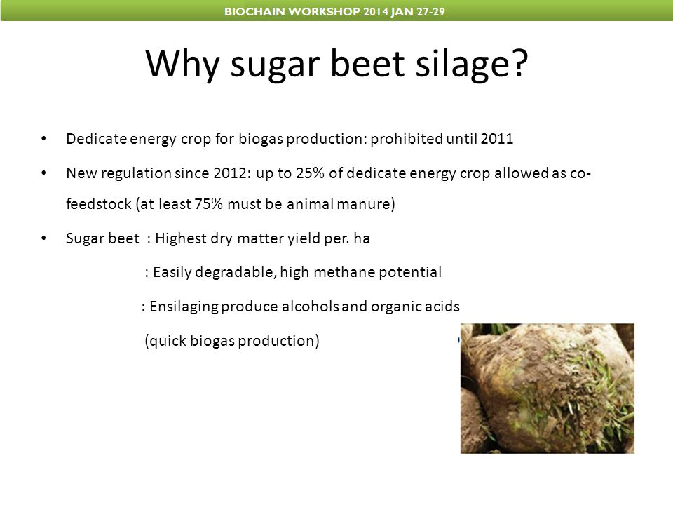 Influence of ensilage