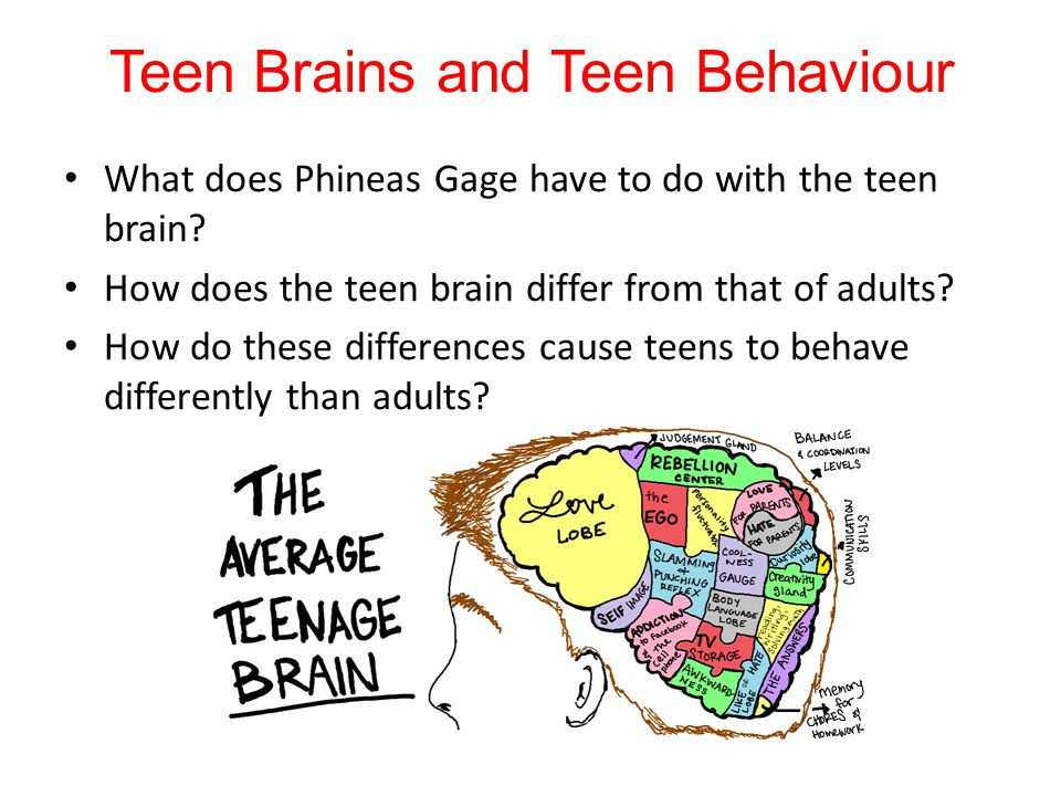 Teen Brains and Teen Behaviour What does Phineas Gage have to do with the teen brain? How does the teen brain differ from that of adults? How do these