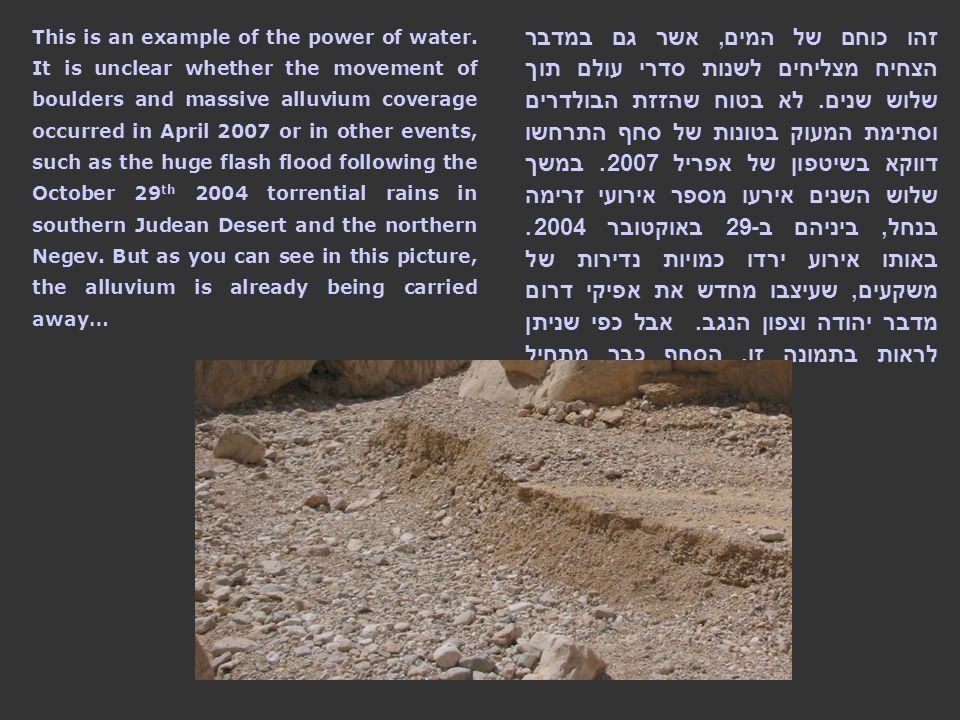 זהו כוחם של המים, אשר גם במדבר הצחיח מצליחים לשנות סדרי עולם תוך שלוש שנים.