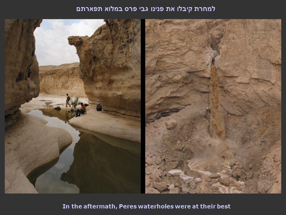 למחרת קיבלו את פנינו גבי פרס במלוא תפארתם In the aftermath, Peres waterholes were at their best