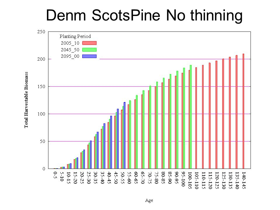 Denm ScotsPine No thinning