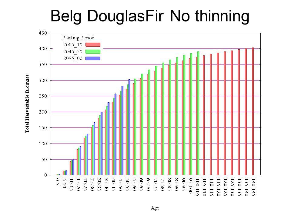 Belg DouglasFir No thinning