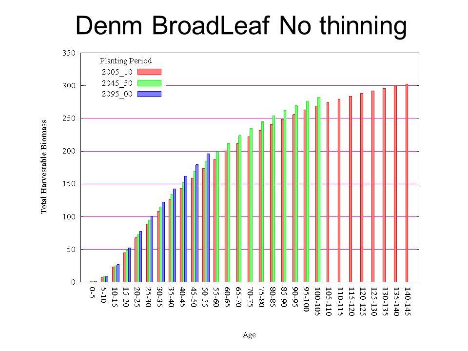 Denm BroadLeaf No thinning