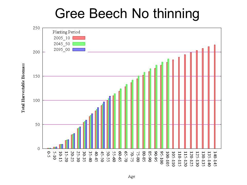 Gree Beech No thinning