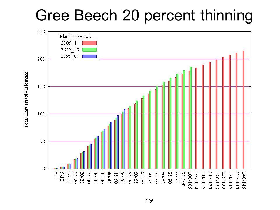 Gree Beech 20 percent thinning