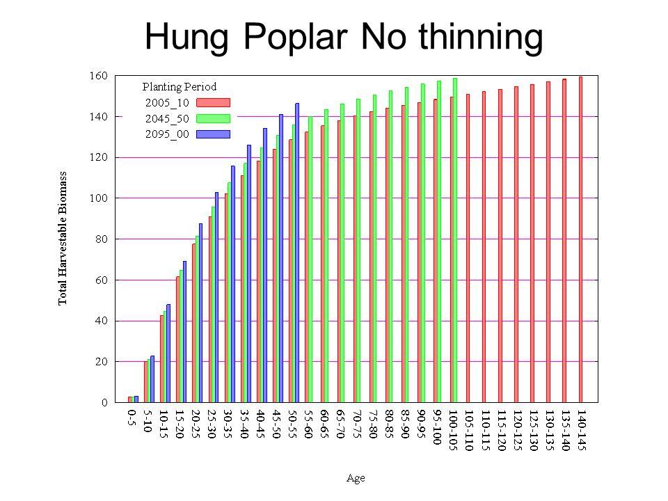 Hung Poplar No thinning