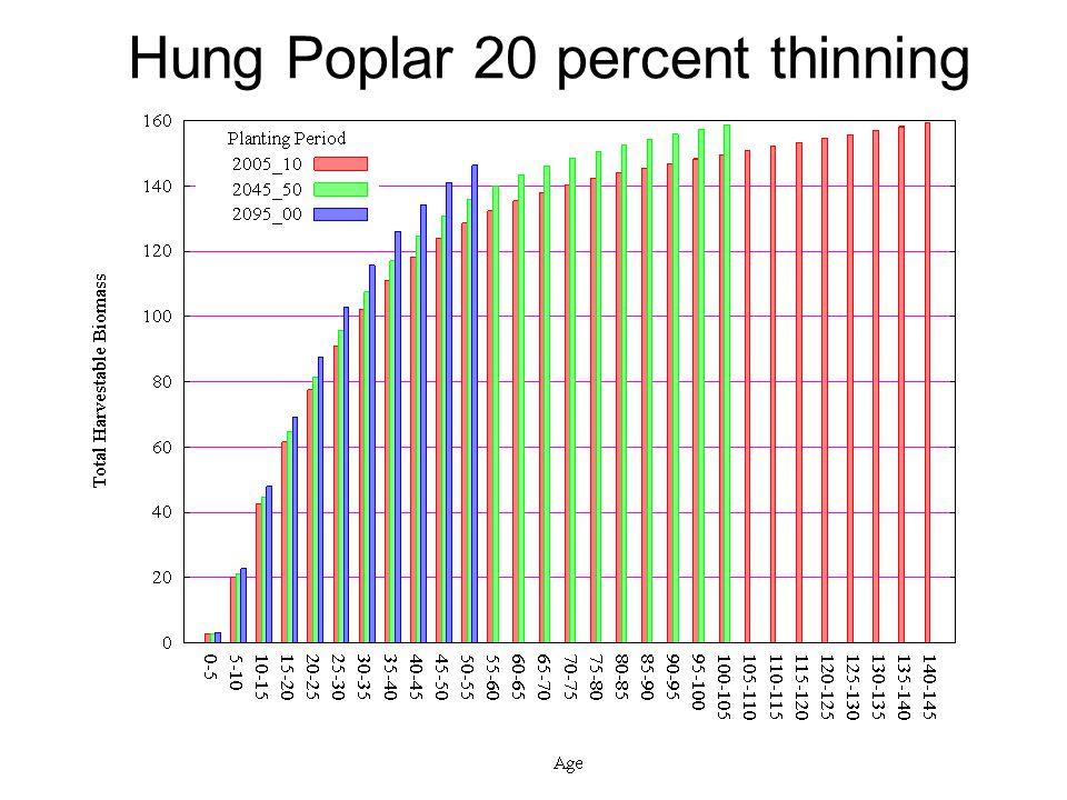 Hung Poplar 20 percent thinning