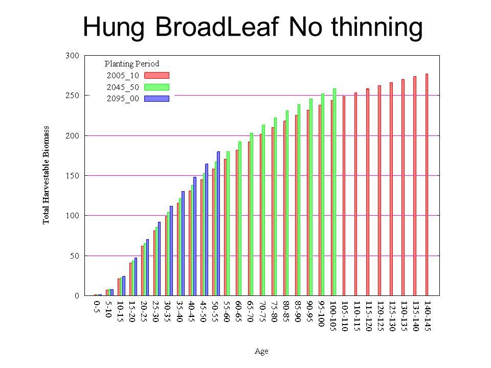 Hung BroadLeaf No thinning