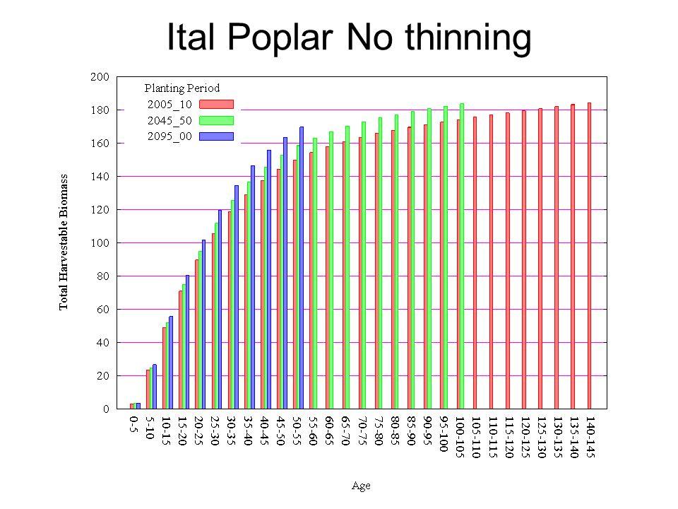 Ital Poplar No thinning