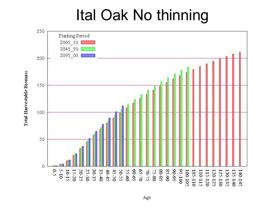 Ital Oak No thinning