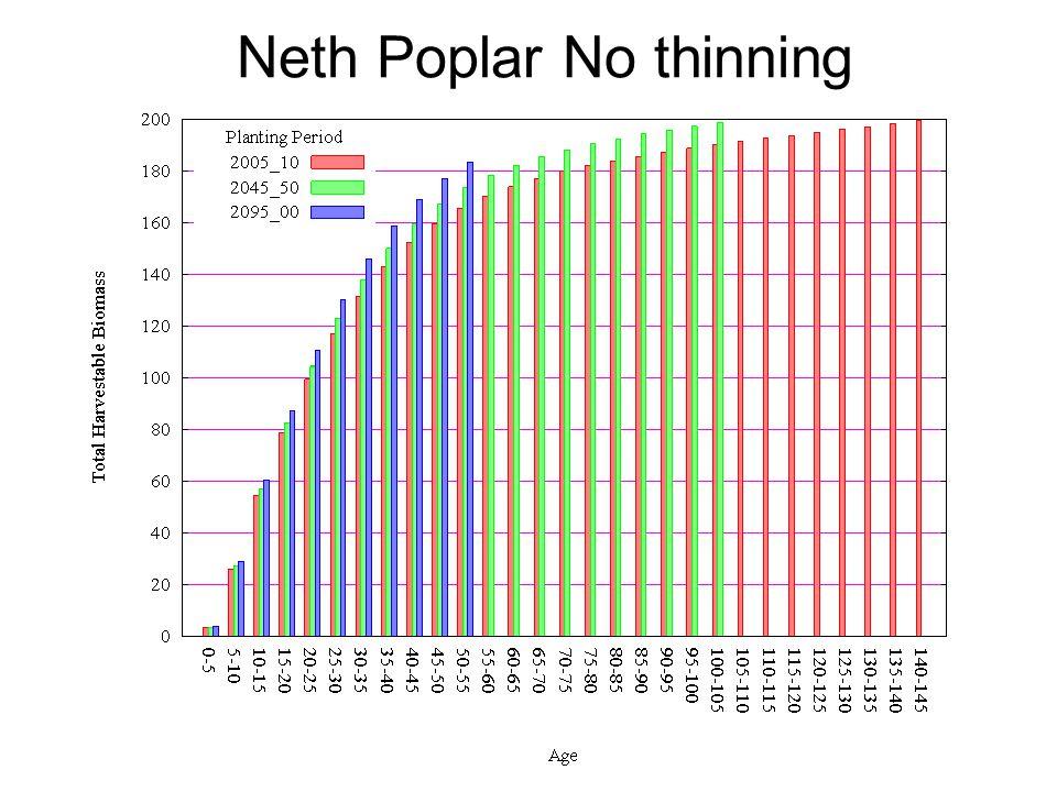 Neth Poplar No thinning