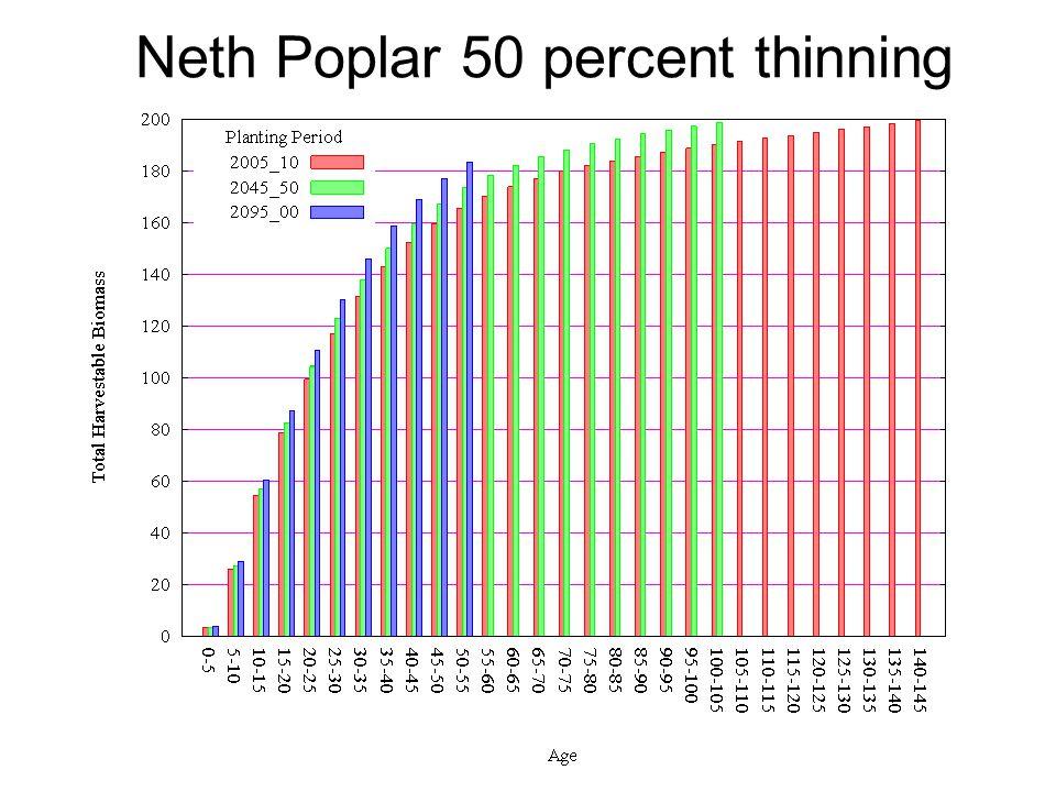 Neth Poplar 50 percent thinning