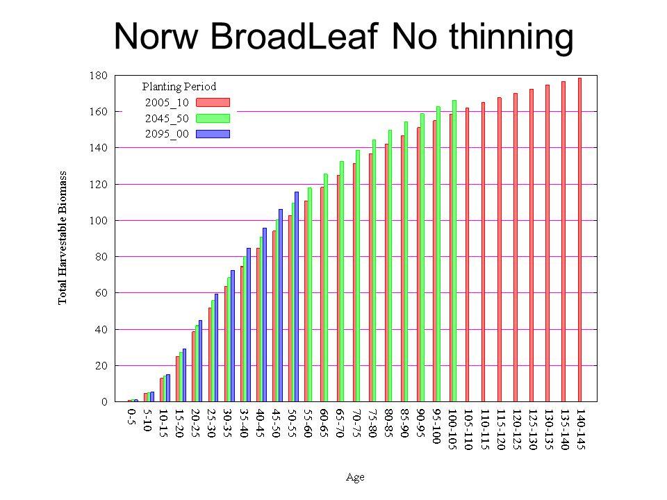 Norw BroadLeaf No thinning