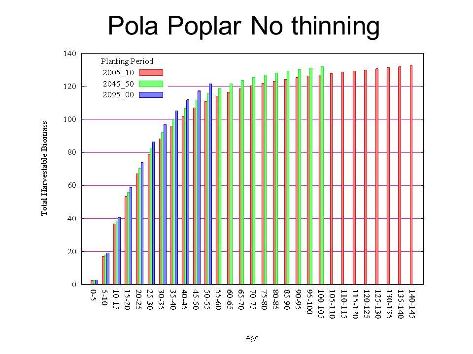 Pola Poplar No thinning