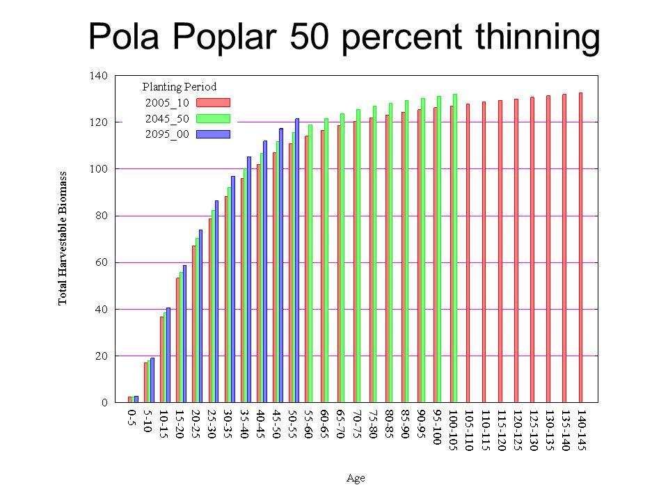 Pola Poplar 50 percent thinning