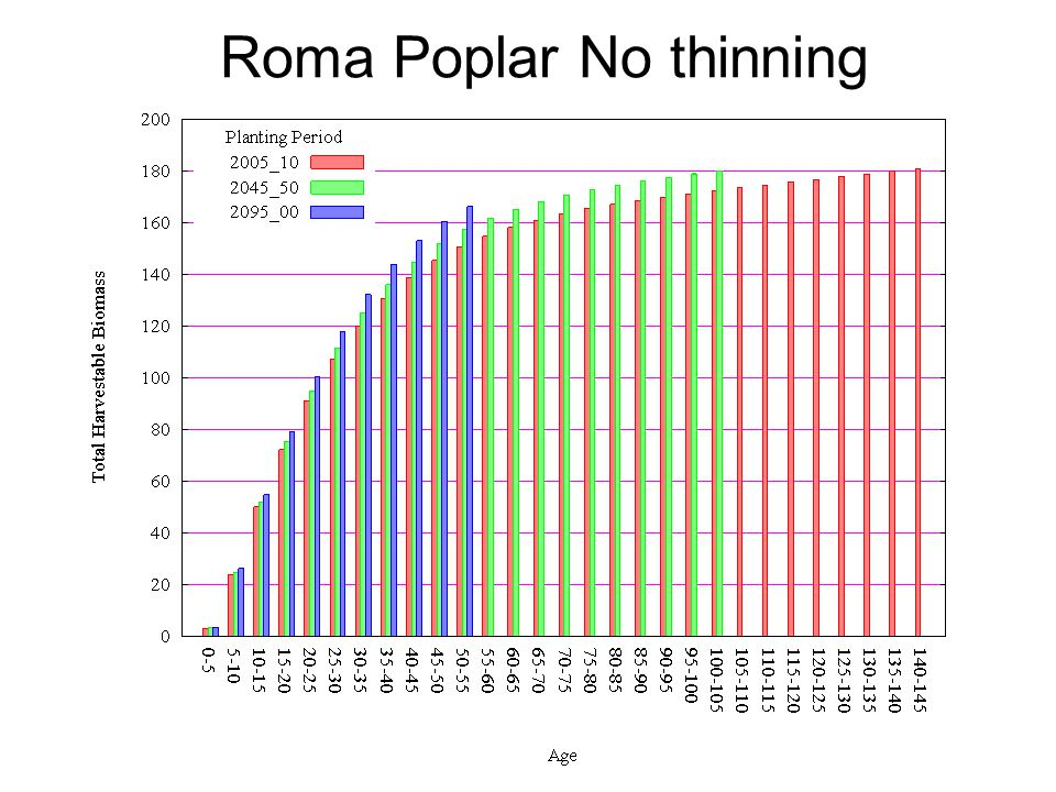 Roma Poplar No thinning