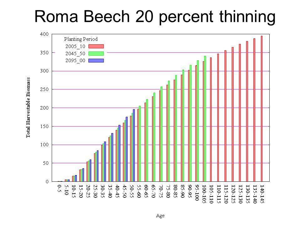 Roma Beech 20 percent thinning