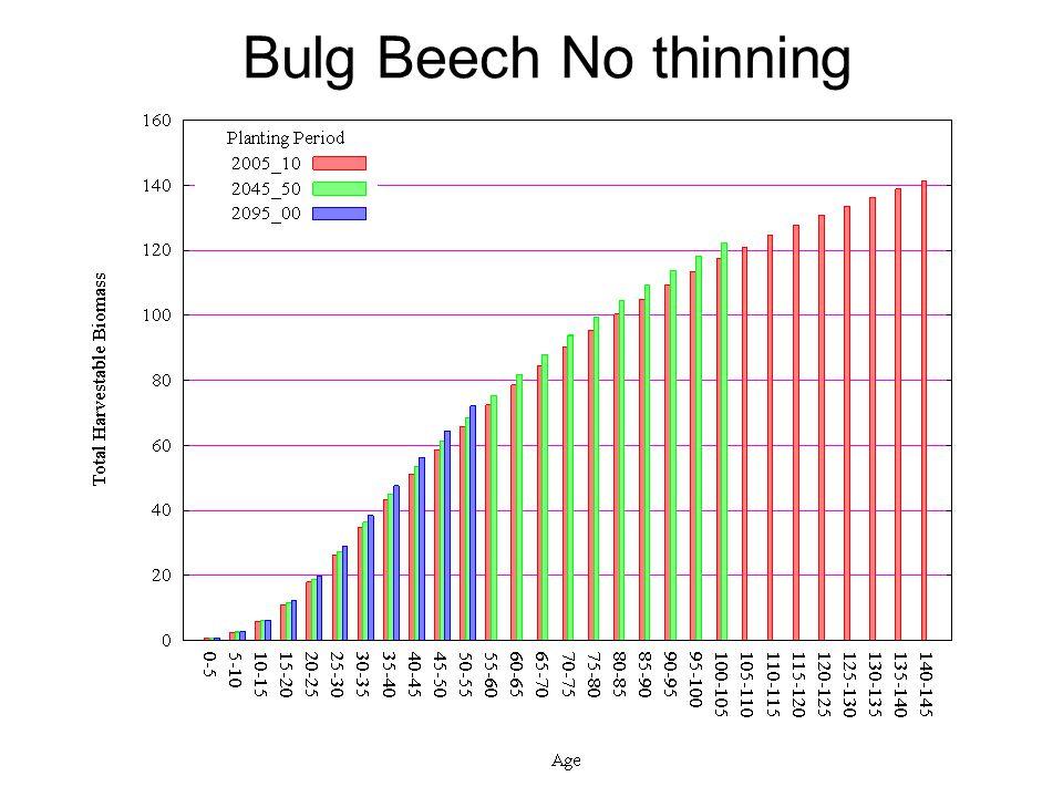 Bulg Beech No thinning