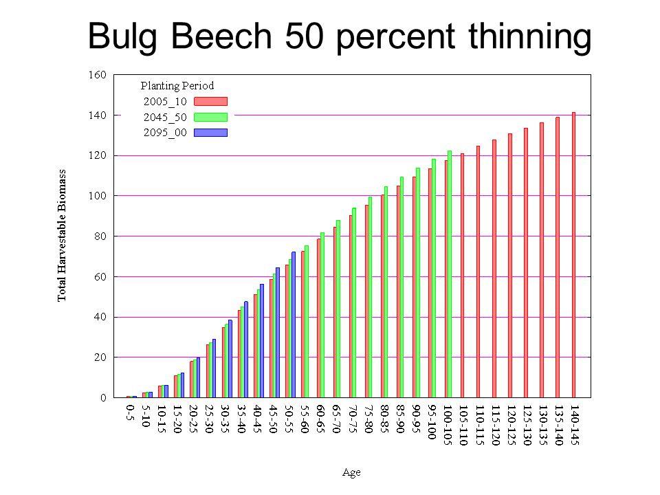 Bulg Beech 50 percent thinning