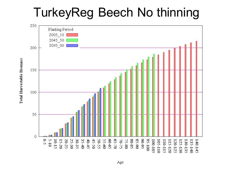 TurkeyReg Beech No thinning