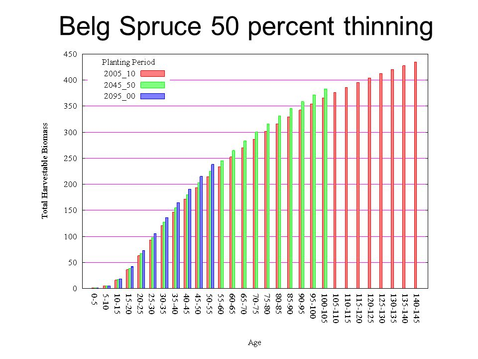 Belg Spruce 50 percent thinning