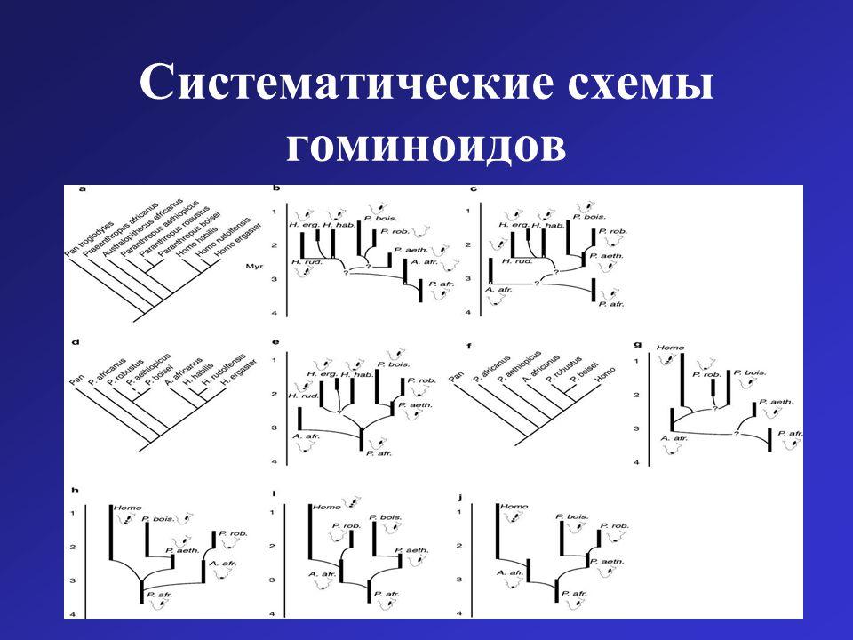 Систематические схемы гоминоидов