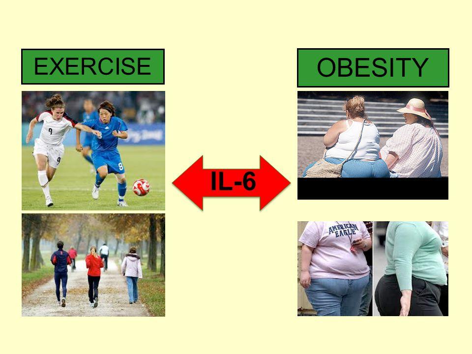 OBESITY EXERCISE IL-6