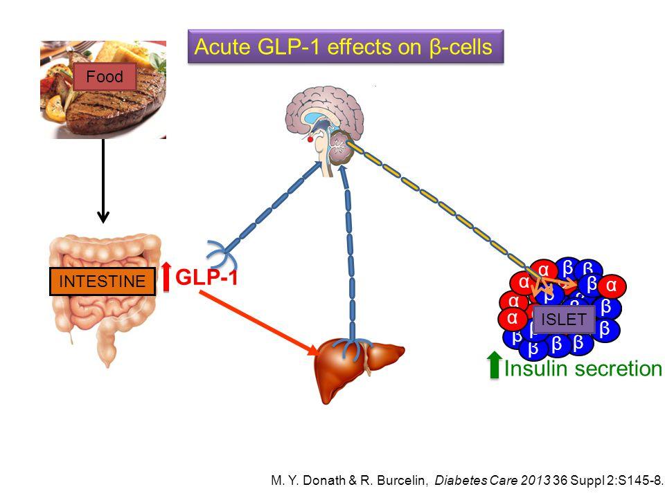α β α β β α α β ββ α β α β β β α β α β β α β α β β ISLET Insulin secretion Acute GLP-1 effects on β-cells GLP-1 INTESTINE Food M. Y. Donath & R. Burce