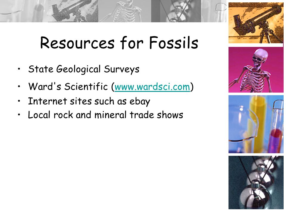 Resources for Fossils State Geological Surveys Ward s Scientific (www.wardsci.com)www.wardsci.com Internet sites such as ebay Local rock and mineral trade shows