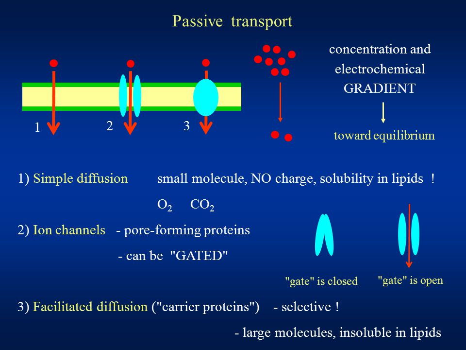 Passive transport 1 2 3 1) Simple diffusionsmall molecule, NO charge, solubility in lipids ! O 2 CO 2 2) Ion channels - pore-forming proteins - can be