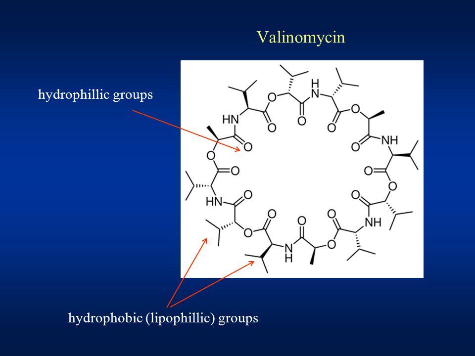 Valinomycin hydrophillic groups hydrophobic (lipophillic) groups